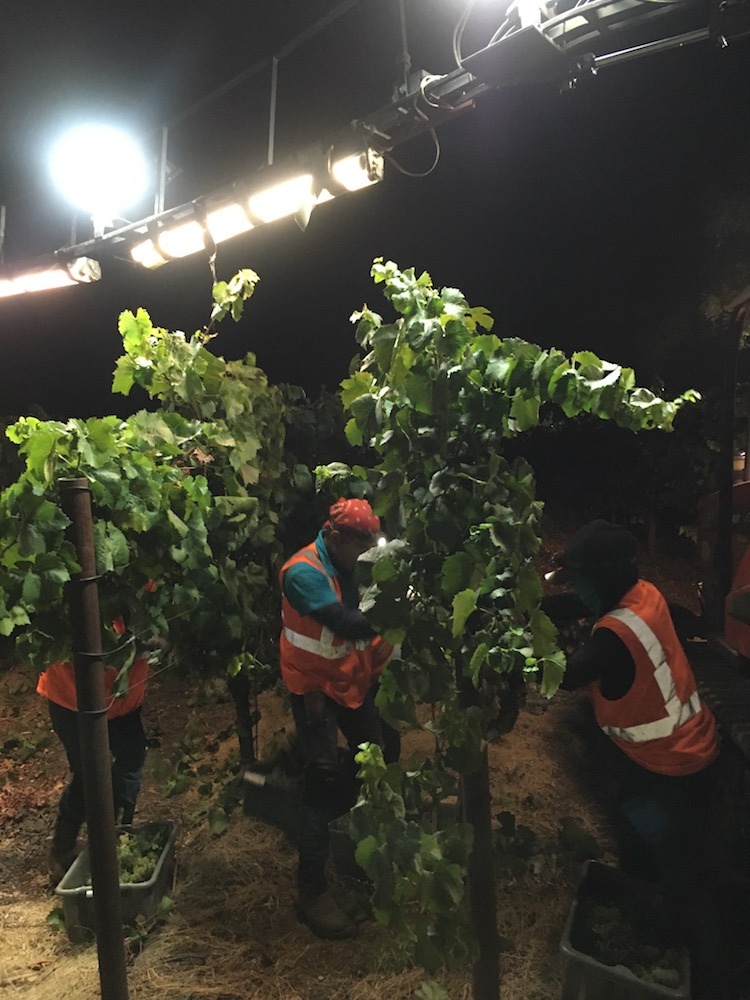 guys-night-harvest
